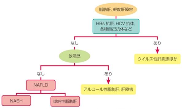 NAFLDのスクリーニング診断画像