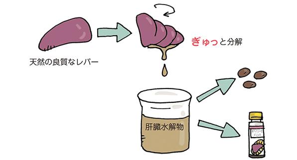 肝臓水解物の生成方法をあらわしたイラスト