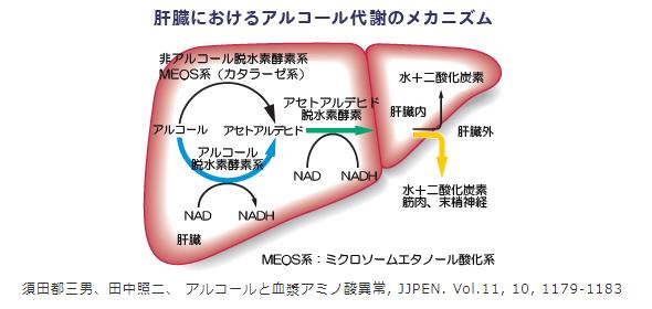 肝臓におけるアルコール代謝のメカニズムをあらわしたイラスト
